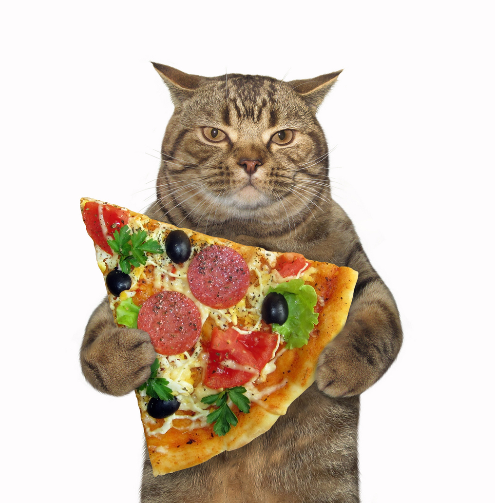 A cat eating pizza